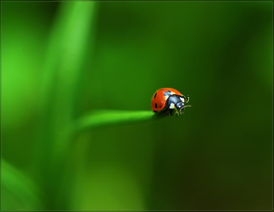 фото Обитатель Зеленой планеты.